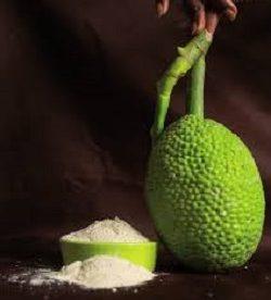 Production de farine de fruit à pain