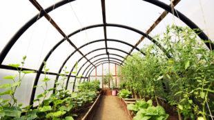 Produire des légumes toute l'année grâce à une serre solaire fonctionnelle