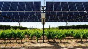 Agriculture des panneaux solaires pour protéger les vignes